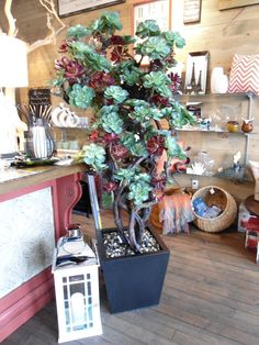 A tree at Louise's Cottage & Home in downtown Goderich, Ontario.