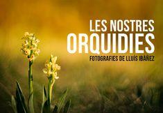 Les nostres orquídies. Lluís Ibañez.