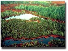 Wetlands Classification and Types