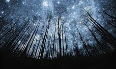 GALLOWAY FOREST PARK - SCOTLAND