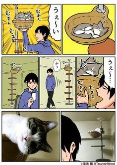 Cat Comics, Funny Comics, Japan Funny, Soft Kitty Warm Kitty, Mixed Feelings, Cool Cats, Funny Photos, Neko, Funny Cats