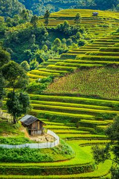If you truly love nature, you are bound to love these alluring Rice Terraces in Vietnam. Vietnam, Nature Images, Nature Pictures, The Beautiful Country, Beautiful Places, Places To Travel, Places To Visit, Village Tours, Nature Photography