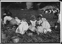 Young pickers on Swift's Bog. All working. Falmouth, Mass., 09/20/1911, Lewis Hine