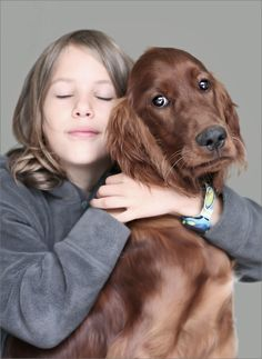 dog - Irish Setter Such great family dogs!!!