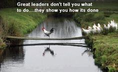Funny pictures about Great Leaders. Oh, and cool pics about Great Leaders. Also, Great Leaders photos. Farm Animals, Funny Animals, Cute Animals, Funny Birds, Funny Pets, Funny Humor, Follow The Leader, Chickens And Roosters, Tier Fotos