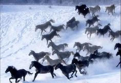 #Horses running in the #snow