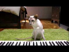 International Cat Day. Fe9News episode 4 - YouTube