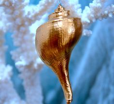Gilded Large Shell
