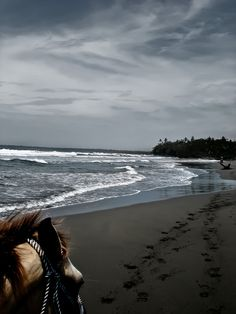 Shot during a horse back riding excursion in #CostaRica on the untouched black sand beaches