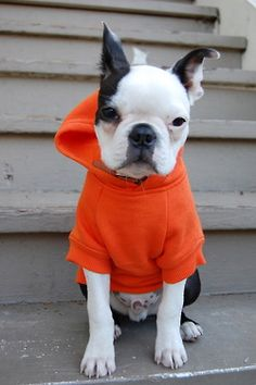 Nixon at 3-4 months old rockin his orange hoodie