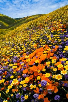 Spring bouquet by Reed Kaestner on Capture Kern County // Wild flowers carpet the hills after spring rains