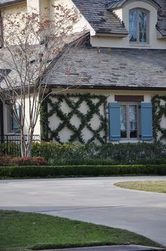 jasmine X ivy on exterior wall of house (not so sure I like the idea of ivy, but it sure adds character).