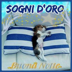 Day For Night, Good Night, Good Morning, Sweet Dreams, Animals And Pets, Throw Pillows, Italy, Good Night Greetings, To Sleep
