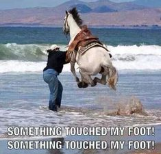 Every Time At The Beach. Lol, I was on a 17 hand Saddlebred who did this bc a bee flew under him. His long legs took him higher and I stayed on!