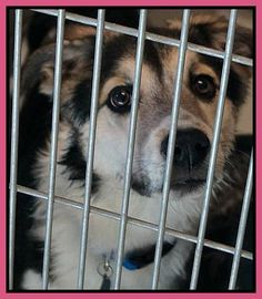 HELP SAVE DAKOTA...URGENT EU IF NOT OUT BEFORE NOON TOMORROW SAT. DEC. 1, 2012 URGENTS IRVING ANIMAL SHELTER 972-721-2256 AFTER HOURS NUMBER: 972-721-3597***PLEASE SHARE***HELP!!!