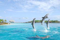 Imagini pentru poze cu delfini