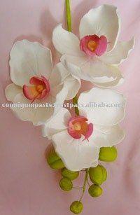 Moon Orchid Phalaenopsis Gum Past