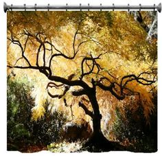 Bonsai Japanese Maple Shower Curtain
