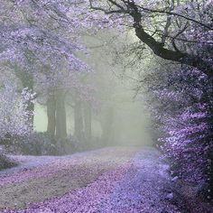 Beauty through the mist