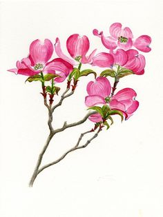 Pink Dogwood Array Painting by Sharon Freeman - Pink Dogwood Array Fine Art Prints and Posters for Sale