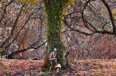 In Search of Faerie by Julian Bolt 'Elf 3'