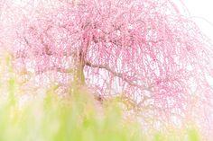 東京カメラ部 Editor's Choice:Mariko Shinoda