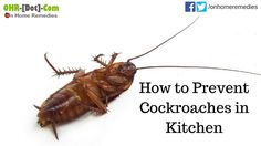 How to Prevent Cockroaches in Kitchen | 5 Home Remedies
