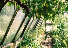 Greenhouse by Dulcette, via Flickr