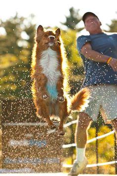 Dock Diver Dogs by DAN P. PETERSON, via Behance