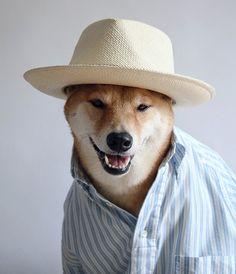 Menswear Dog;