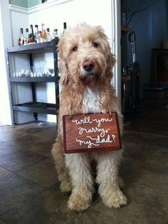 Doggie Proposals!!! <3 http://howheasked.tumblr.com/post/77941291265/puppy-proposals