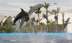 [Dolphins Oceanogràfic] Javier Yaya pictures