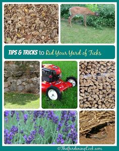 Plants That Repel Ticks : Good How To Get Rid Of Ticks Around Your Yard The Gardening Cook Plants That Repel Ticks. Plants,Repel,That,Ticks Organic Gardening, Gardening Tips, Get Rid Of Ticks, Be Natural, Garden Pests, Pest Control, Bug Control, Outdoor Gardens, Nature