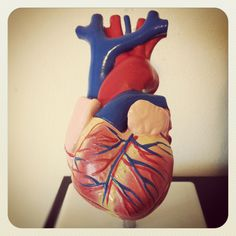 School Projects On Pinterest Human Heart Models And