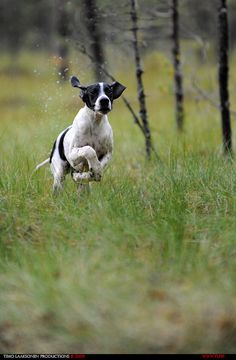 Pointer. By Timo Laaksonen.