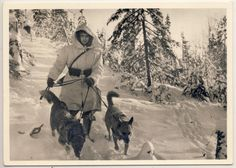 "Waffen-SS Postcard.  Kampf der SS-Gebirgsdivision Nord  (Fight of the SS-Mountain Division North)  Our 4-legged friends. ""Messenger Dogs""."
