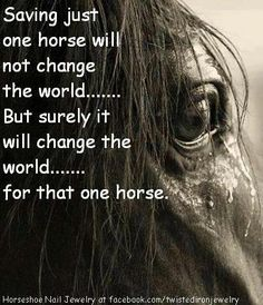 from  Equine Rescue Inc. facebook page: https://www.facebook.com/pages/EQUINE-RESCUE-INC/134153275628