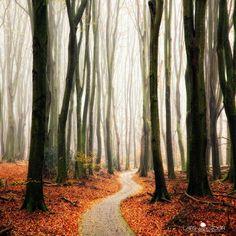 Camino de bosque en otoño