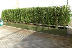 Instant Hedge - Privacy & Screening | Roof Top Gardens - Ideas, Design, Installation