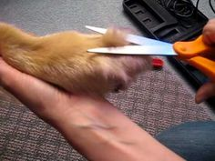 How to Trim Your Dog's Feet - YouTube