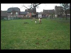Unsere Walliser-Schafe mit ihren Lämmern - YouTube