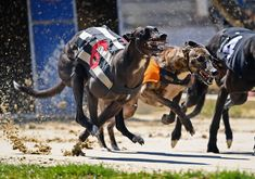 US protests and racing returns: Tuesday's best photos Perry Barr, Sea Monkeys, Maltese Poodle, Banda Aceh, Action Photography, Picture Editor, Pet Photographer, Lafayette Park, Whippet