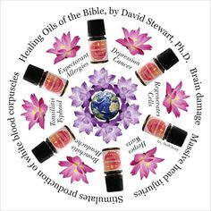 Essential oils of the Bible http://www.rebeccaatthewell.org/store/products/anointing-breaks-the-yoke/