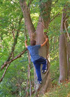 Waldspiele / Spiele im Wald... Viele tolle Anregungen