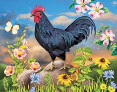 Black Rooster. by Rosiland Solomon.