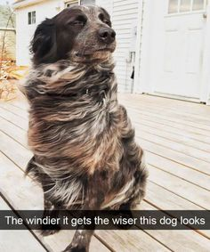 Hilarious Animal Memes That Will Absolutely Make You Smile - 7