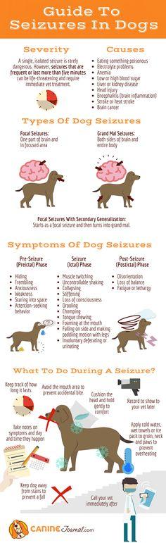 Dog Seizures: Causes, Symptoms And Treatments - Frito - Gesunde World Dog Health Tips, Pet Health, Veterinarian Assistant, Dog Seizures, Vet Tech Student, Vet Med, Vet Clinics, Animal Science, Dog Safety