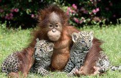 cute animal pictures - Pesquisa Google