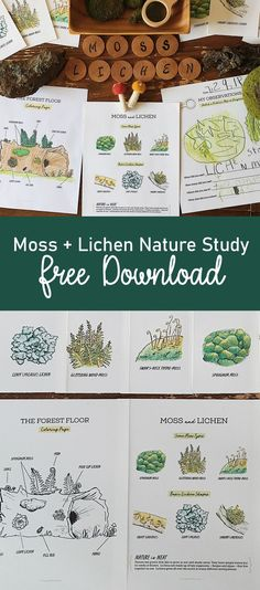 A free download for your child's Charlotte Mason-inspired nature journal. Moss and Lichen poster, flashcards, coloring page and nature journal page. #naturejournal #freecoloringpage #freedownload #homeschool #naturestudy #moss #mossstudy Montessori Art, Montessori Elementary, Home Learning, Learning Time, Learning Spanish, Nature Activities, Kid Activities, Homeschool Apps, Nature Posters