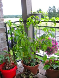 Container Gardening in the Pacific Northwest